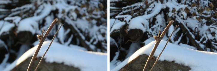 Nikon 1 V2 Live-Bildsteuerung